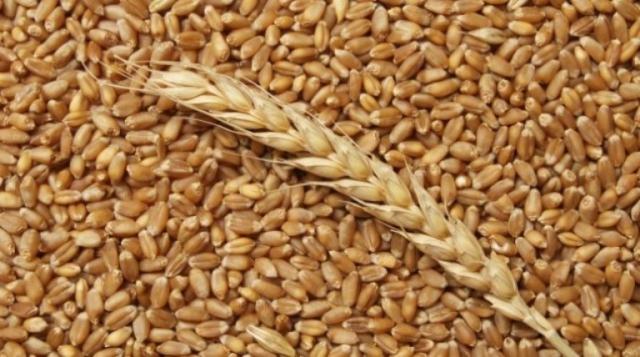 К какому виду растений относится пшеница