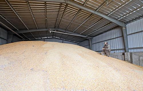 хранит зерно в элеваторе