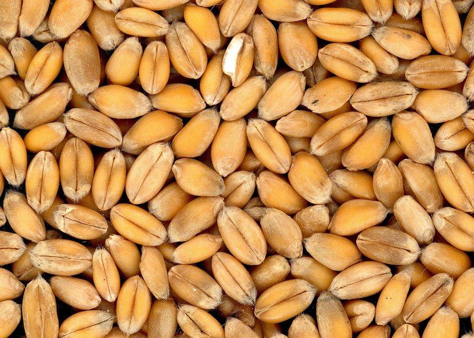 Infratec 1241 для анализа зерна